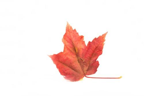 Fallende Blätter berühren den Himmel
