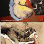 Thür Art Manufacture Kunst in der Chirurgie und Chirurgie in der Kunst