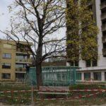 Der Wolkenpavillon entsteht im Innenhof der Alterswohnsiedlung Schönegg in Brugg AG